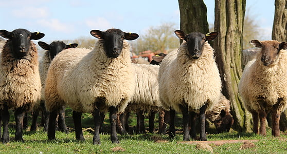 white flock of sheep standing next to each other during daytime
