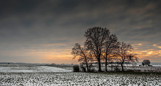 brown bare trees during sunset