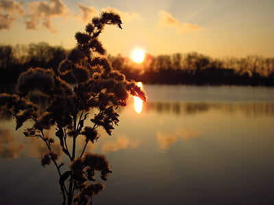 closeup photo of brown petal flowers near body of water during sunset