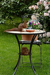 brown squirrel on top of table outdoors