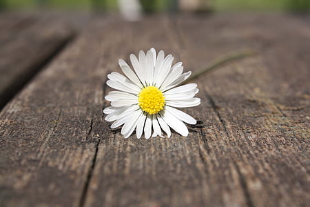 selective photography of white daisy flower