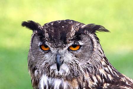 shallow focus photography of black and brown owl