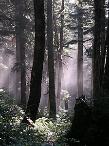 forest during foggy day