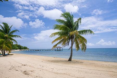 green coconut tree near blue beach at daytime
