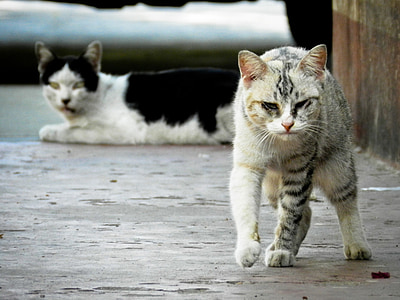 two black and gray gray tabby cats