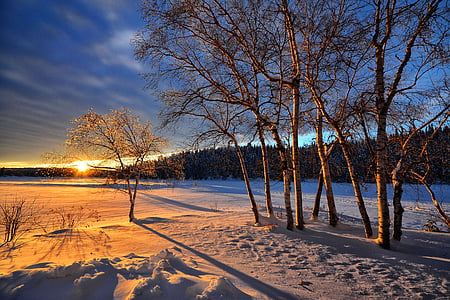 bare trees on snow-covered field