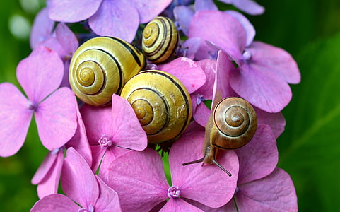 four snails on flowers