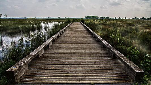 brown wooden dock on marsh