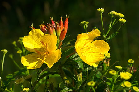yellow petaled flowers blooming at daytime