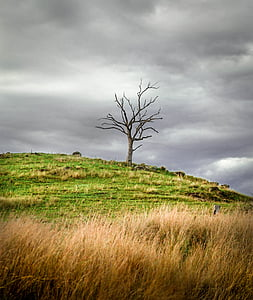 bare tree surrounded by grass