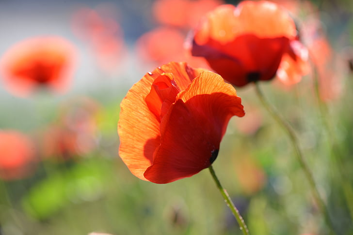 selective focus photo of orange petaled flowers