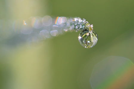 micro photography of water dew