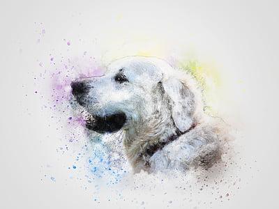 photo of white dog