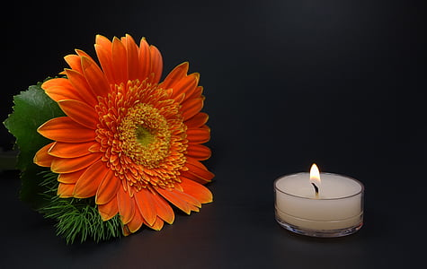 sunflower beside lighted white tealight candle