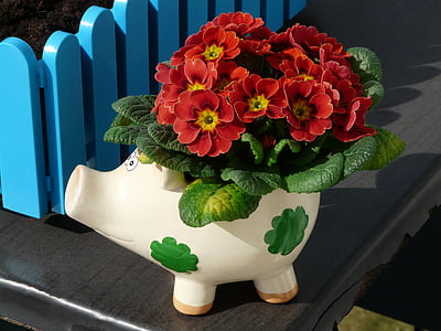 red petaled flowers with white pig pot