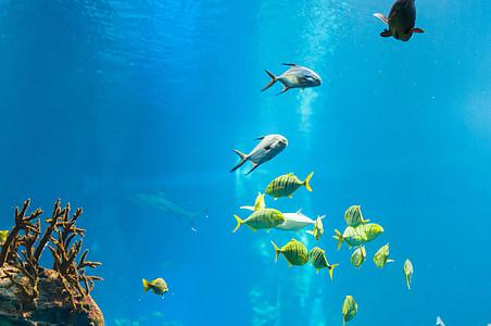 school of assorted fish underwater during daytime