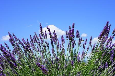 purple flowers under blue sky