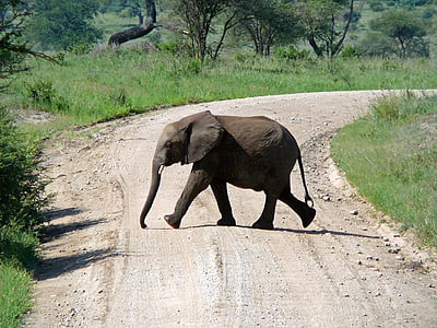 black elephant crossing winding road near trees