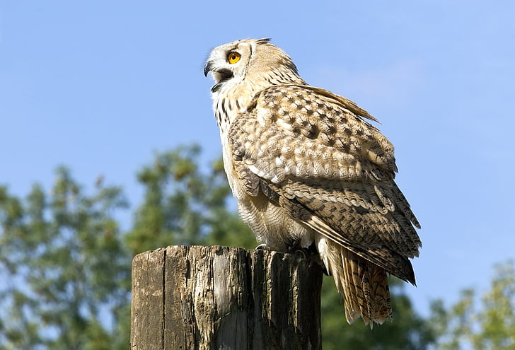 close up photography of brown owl