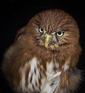 close-up photography of brown and white owl