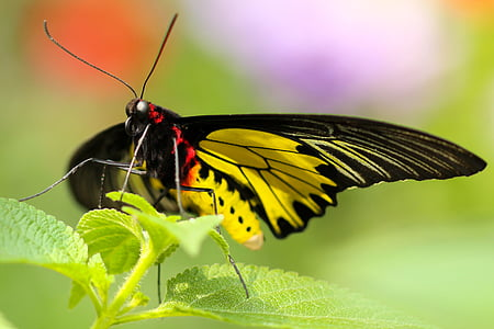 black and yellow butterfly on green leaf
