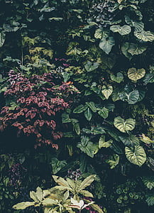 green and purple leaves