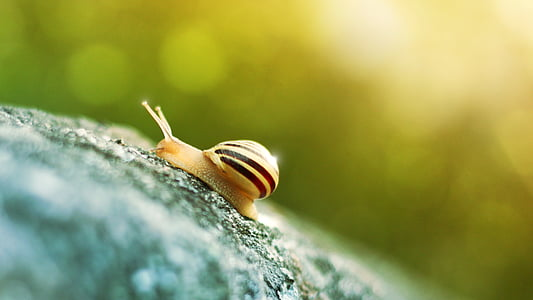 macro photography of beige snail
