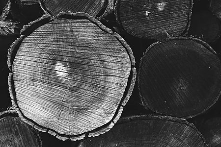 grayscale photography of wood slab