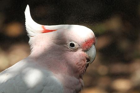 white and pink bird