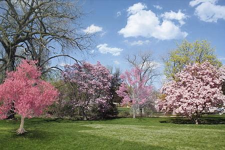 pink cherry blossom under blue sky