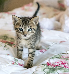 silver tabby kitten on comforter