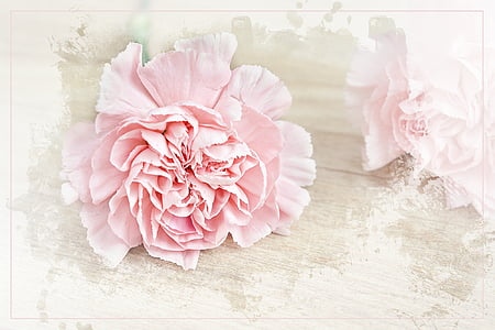 pink petaled flower on white surface