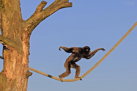 black monkey walking on yellow rope during daytime