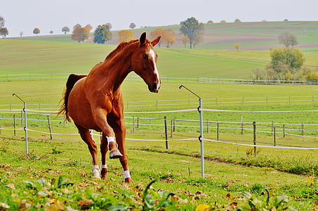 brown horse running on green grass field during day