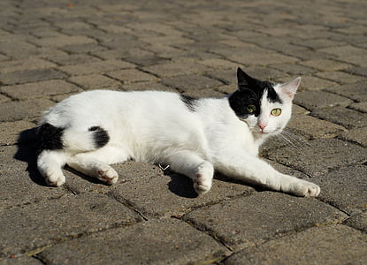 white and black cat lying on concrete surface