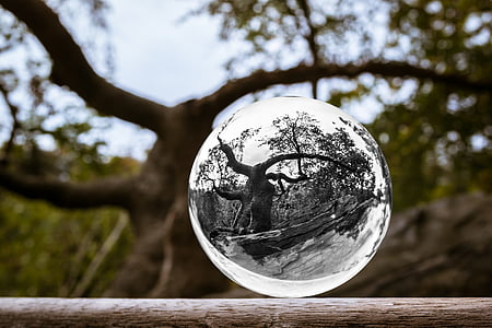 selective focus photo of glass globe reflecting tree with leaves at daytime