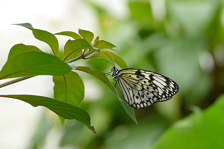 shallow focus photography white and black butterfly on top of green leafe