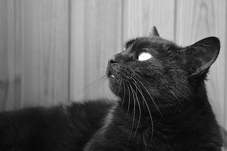 black cat looking upward grayscale photography