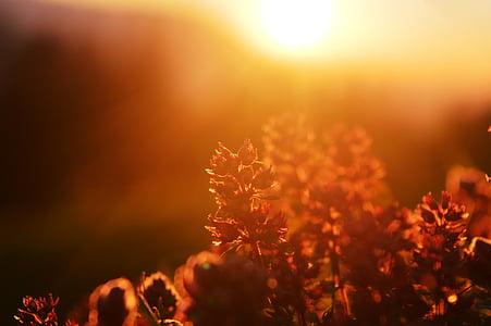 sunbeam, plant, lichtspiel, sunny, sunlight, mood
