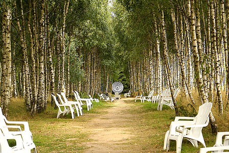 white wooden chairs surrounded with trees