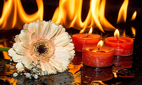 peach-colored Gerbera daisy flower with water droplets beside three red lighted tealight candles
