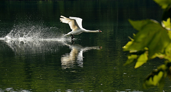 white duck floating on water