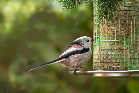 selective focus photography of long-tailed tit perched on bird feeder