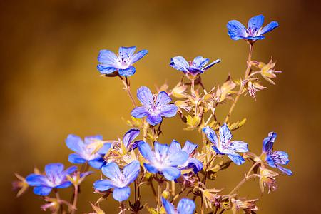 purple petaled flowewr