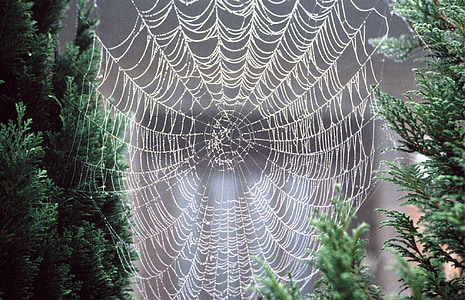 spider net in between green leafed trees