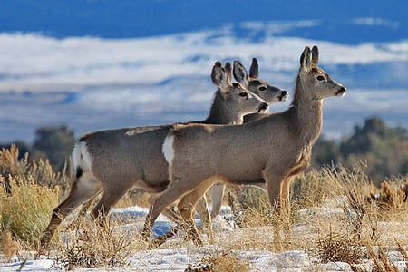shallow focus photography of three gray deers