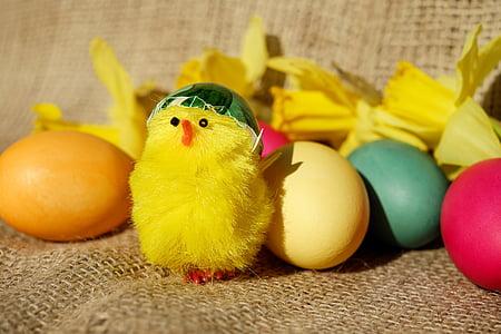 yellow chick plush toy