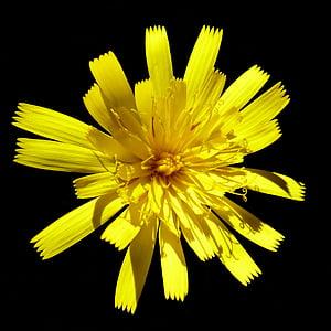 bloomed yellow petaled flower