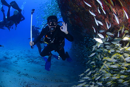 man wearing diving gear surrounded fish