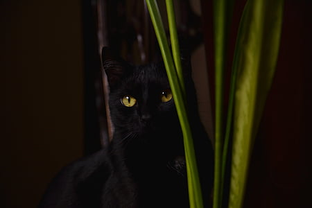 black cat near green leaf plant